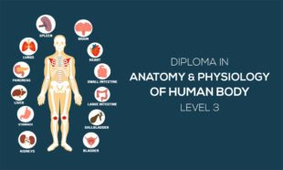 Diploma in Anatomy and Physiology of Human Body Level 3
